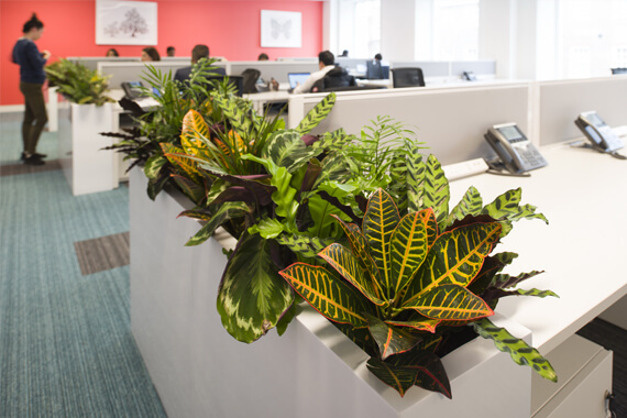 Plant display in an office setting