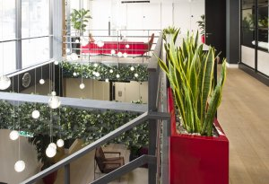 Sanseviera in red container and ivy plants in an office