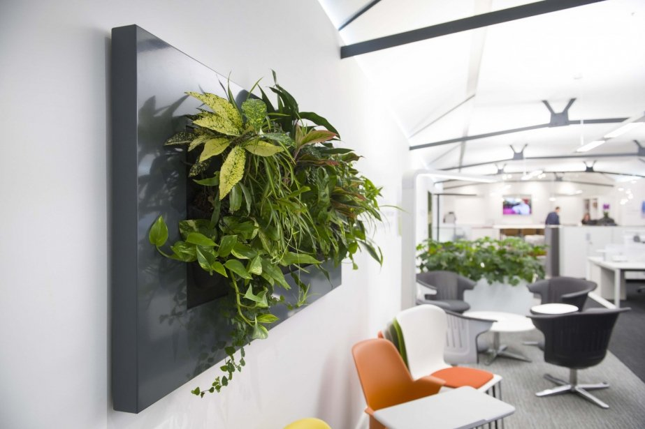 Picture frame style planter on wall with green plant hanging over communal area in office