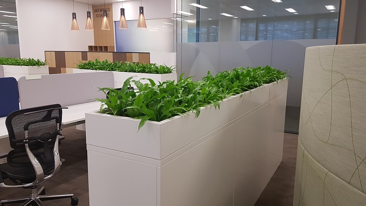 Planters of indoor plants providing nice dividers in open plan office space