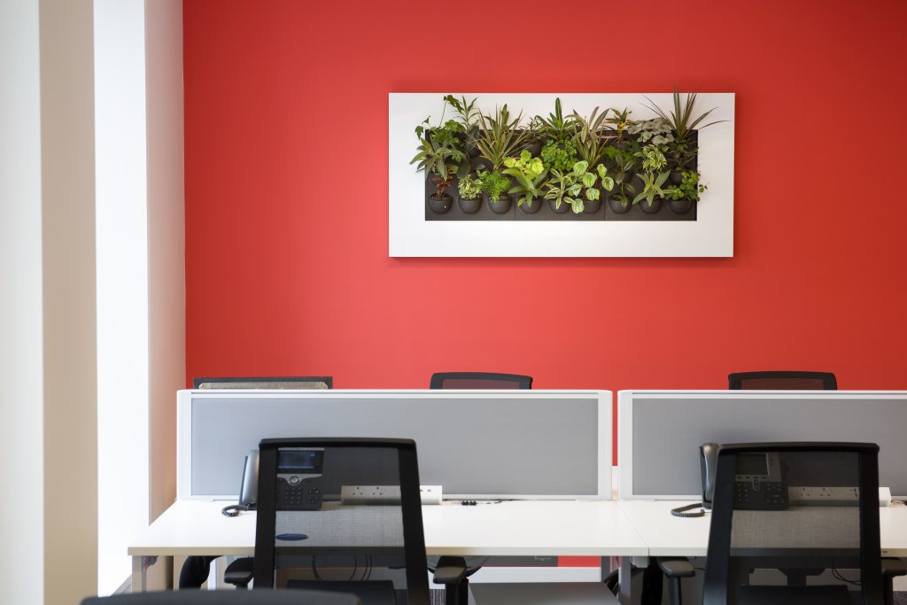 Grogeous photo frame style planter hanging on wall with plants growing, the planter frame is white against a burnt orange wall, there are office style computer desks in front of the wall with mesh chairs and telephones