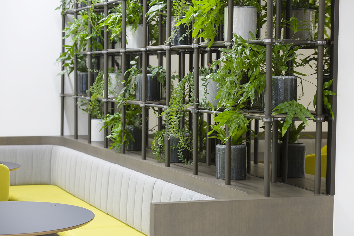 Plant rack office biophilia