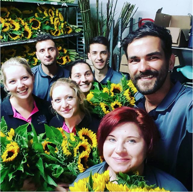 Our happy staff arranging sunflowers
