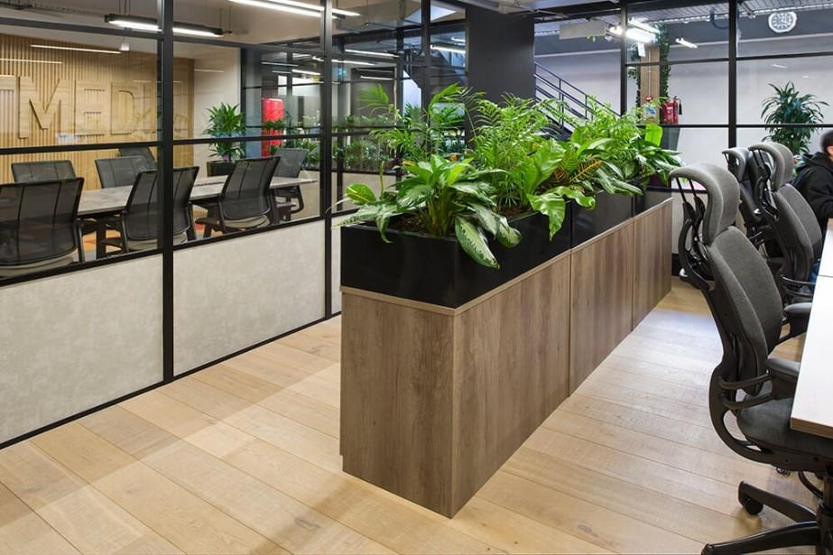mount media case study image of office plants