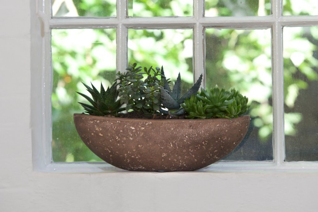 Plant in stone plant pot on window sill