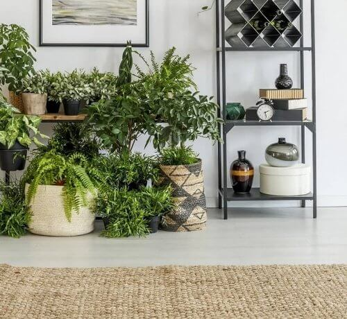 planteria home indoor plants