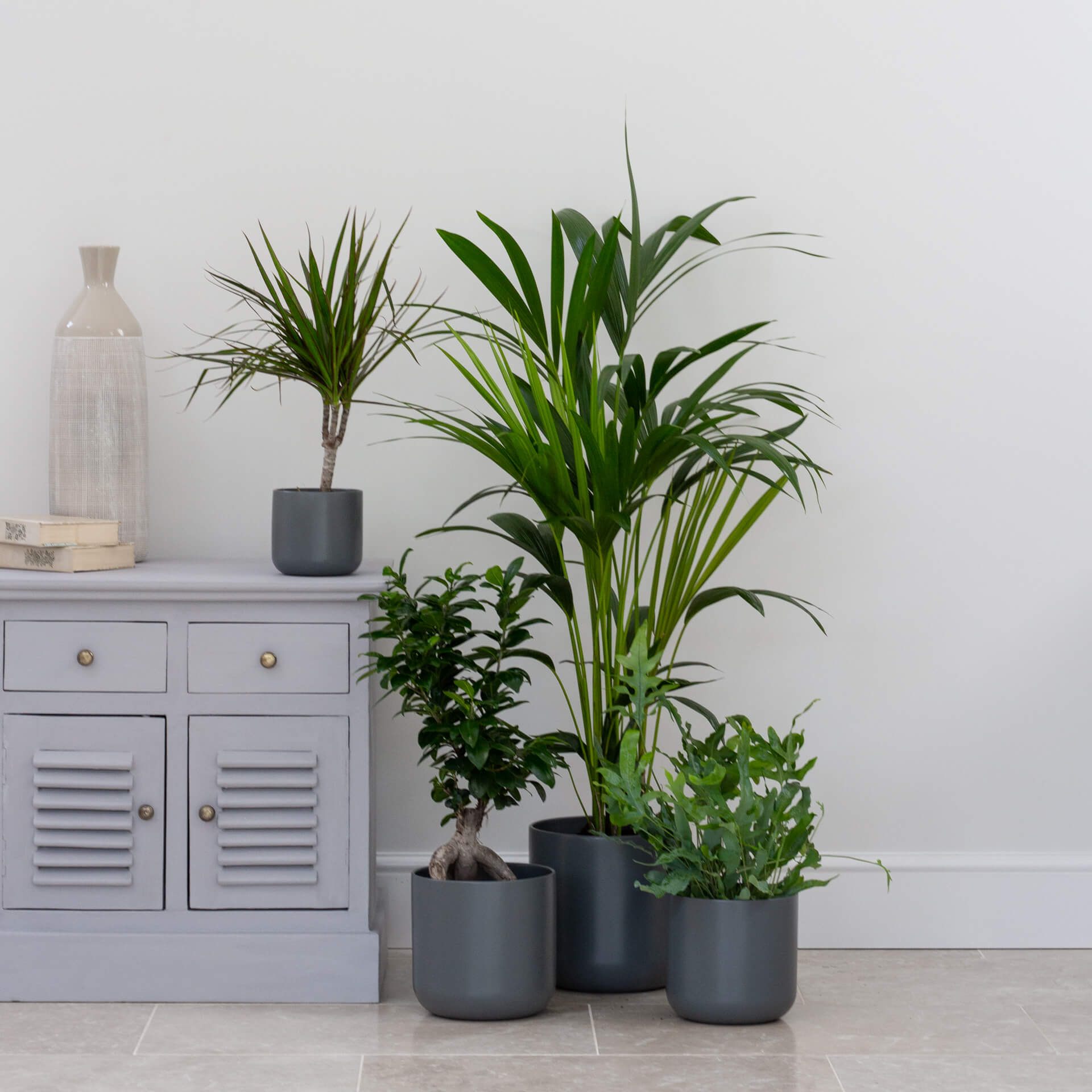 planteria home indoor plants decor