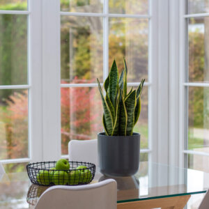 indoor plants from planteria home