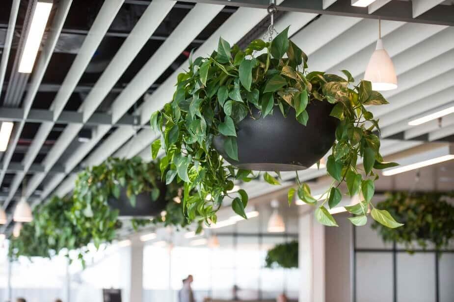 planteria plants