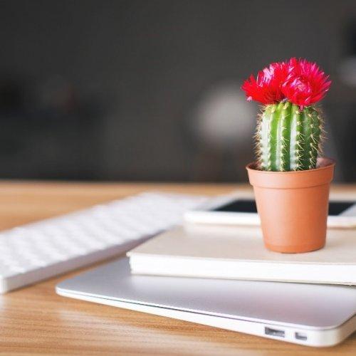 cactus in ceramic pot on desk