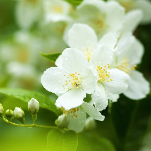 white flower in a green background