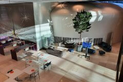 indoor tree in open communal office space, view from above