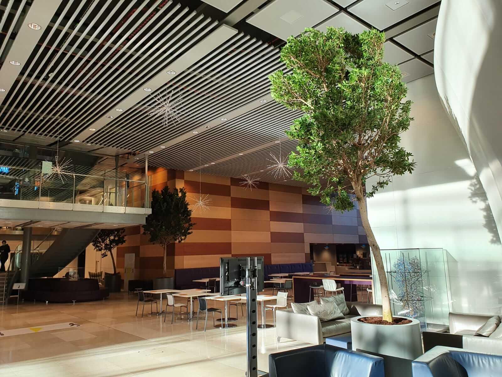 indoor tree in open communal office space