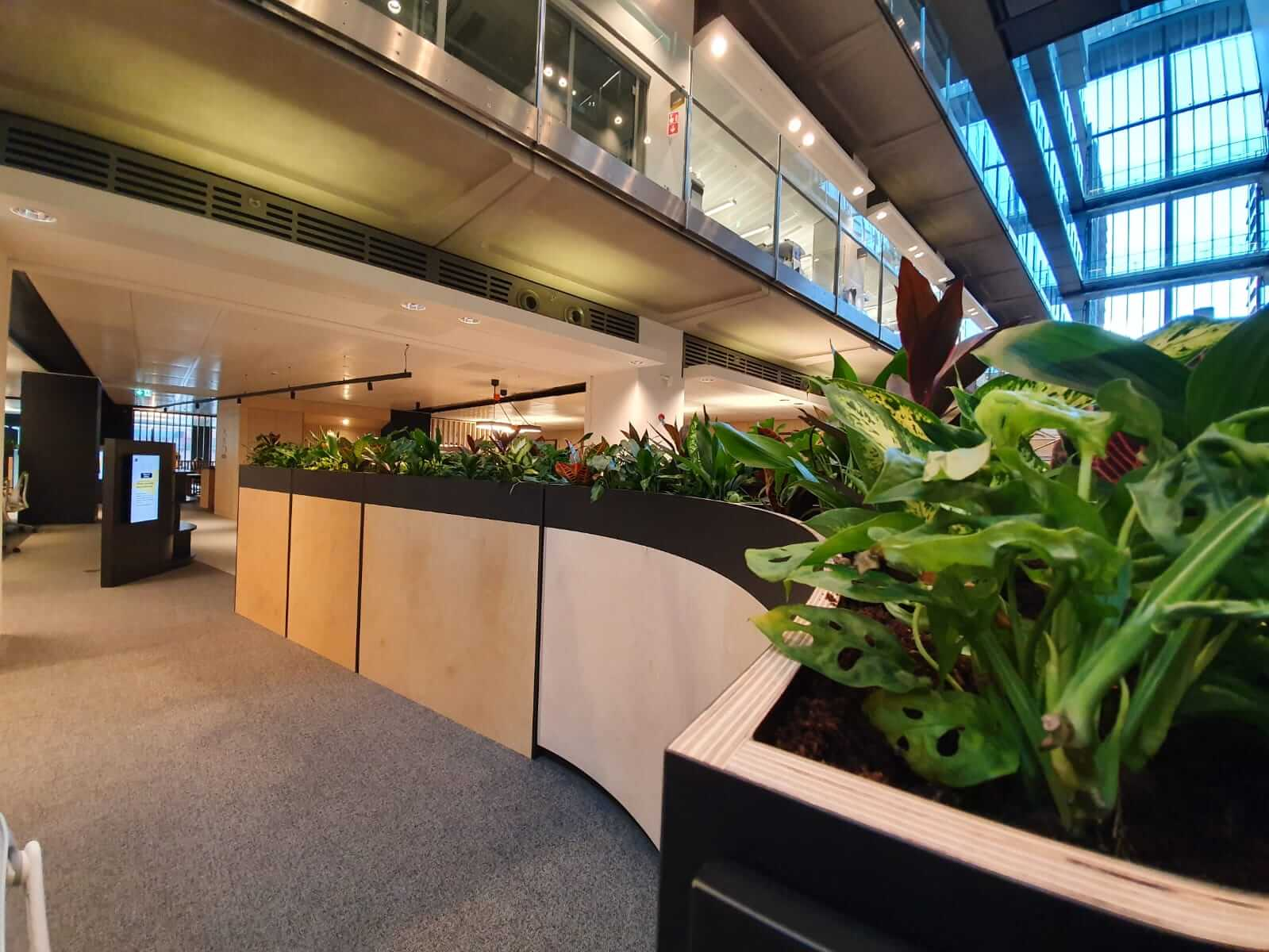communal office area with plants