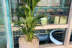indoor plant on raised pot