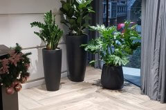 indoor plants in black plant pots