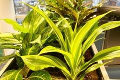 indoor plants in planter