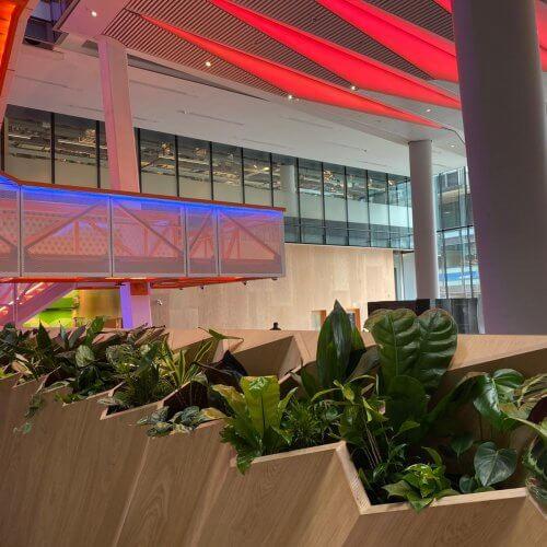 indoor green leafy plants