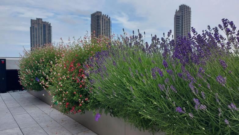 beautiful garden rooftop